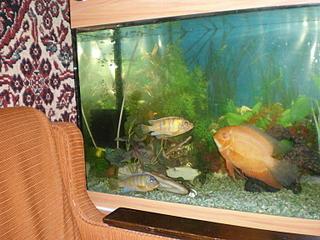 768 X 576 97.4 Kb как восстановить старый аквариум?