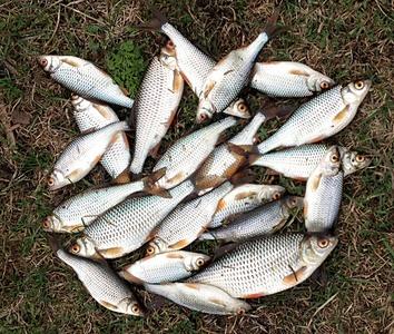 ижевск рыболовный форум