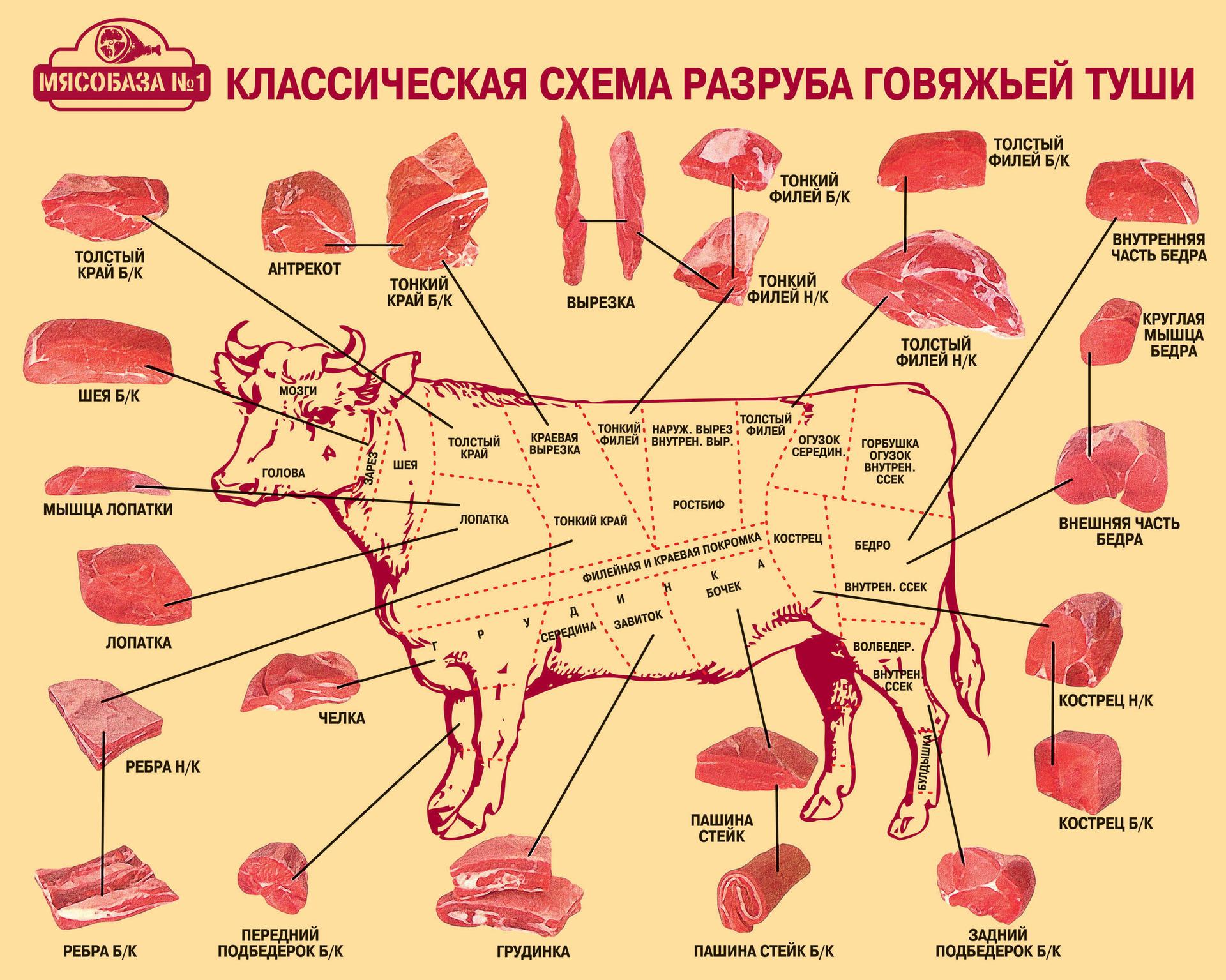 Схема разделки туши говядины фото