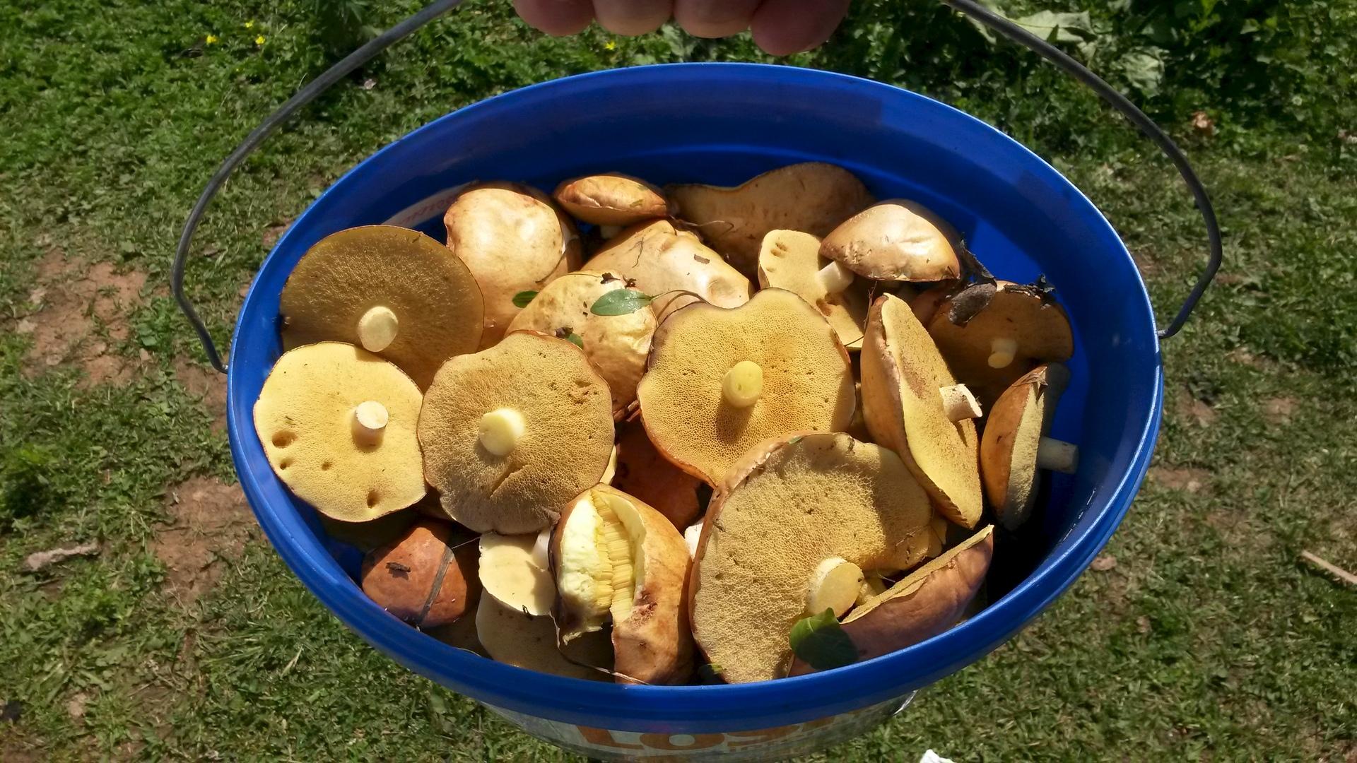 Вырастить грибы в домашних условиях 30