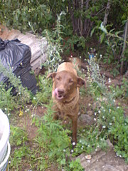 1536 X 2048 648.1 Kb 1536 X 2048 904.1 Kb Собака и ее щенки живут в ужасных условиях. Нужен куратор!