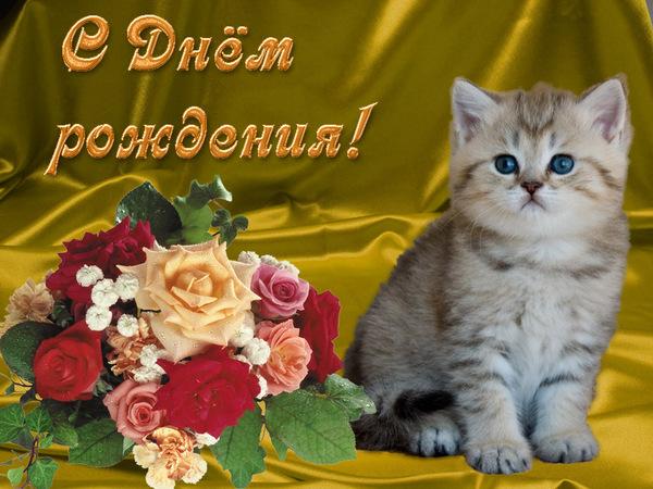 С днем рождения с кошками поздравление открытки с 6