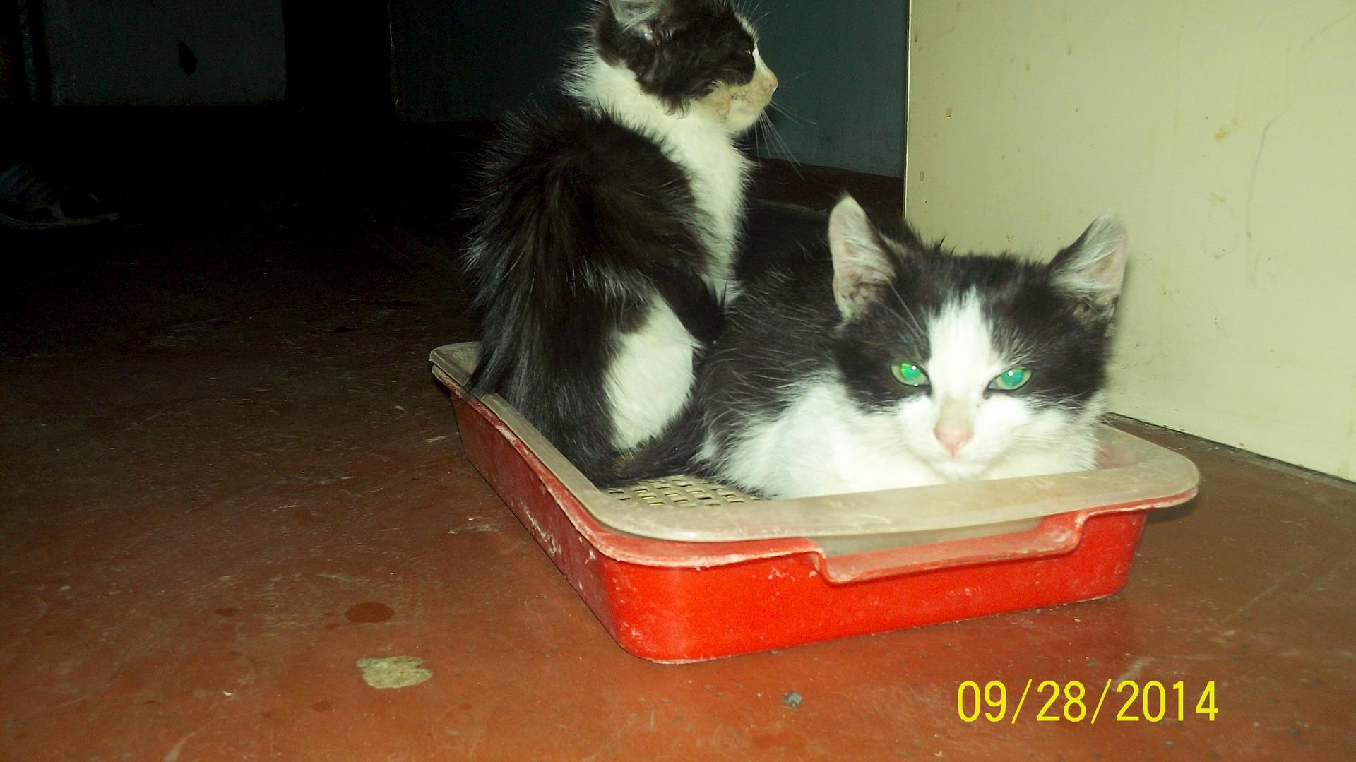 Котятки мальчик и девочка в дар : Звери. Объявления (без модерации)