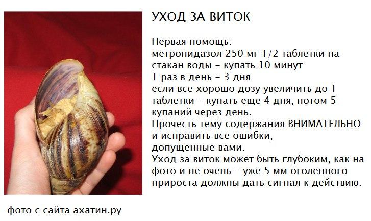 рынки Санкт-Петербурге что нужно улитке в домашних условиях границей