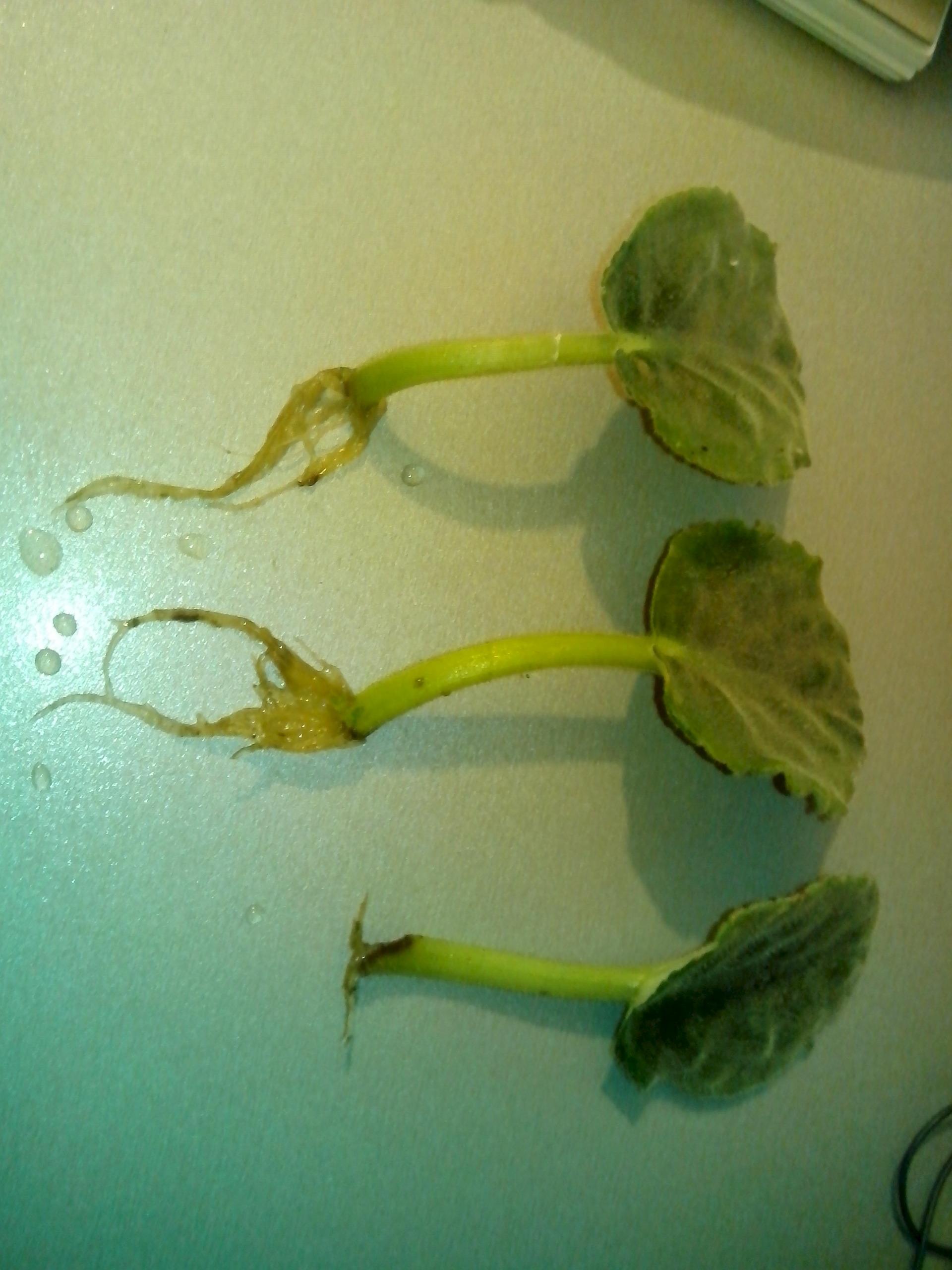 Семена экзотических и редких 46
