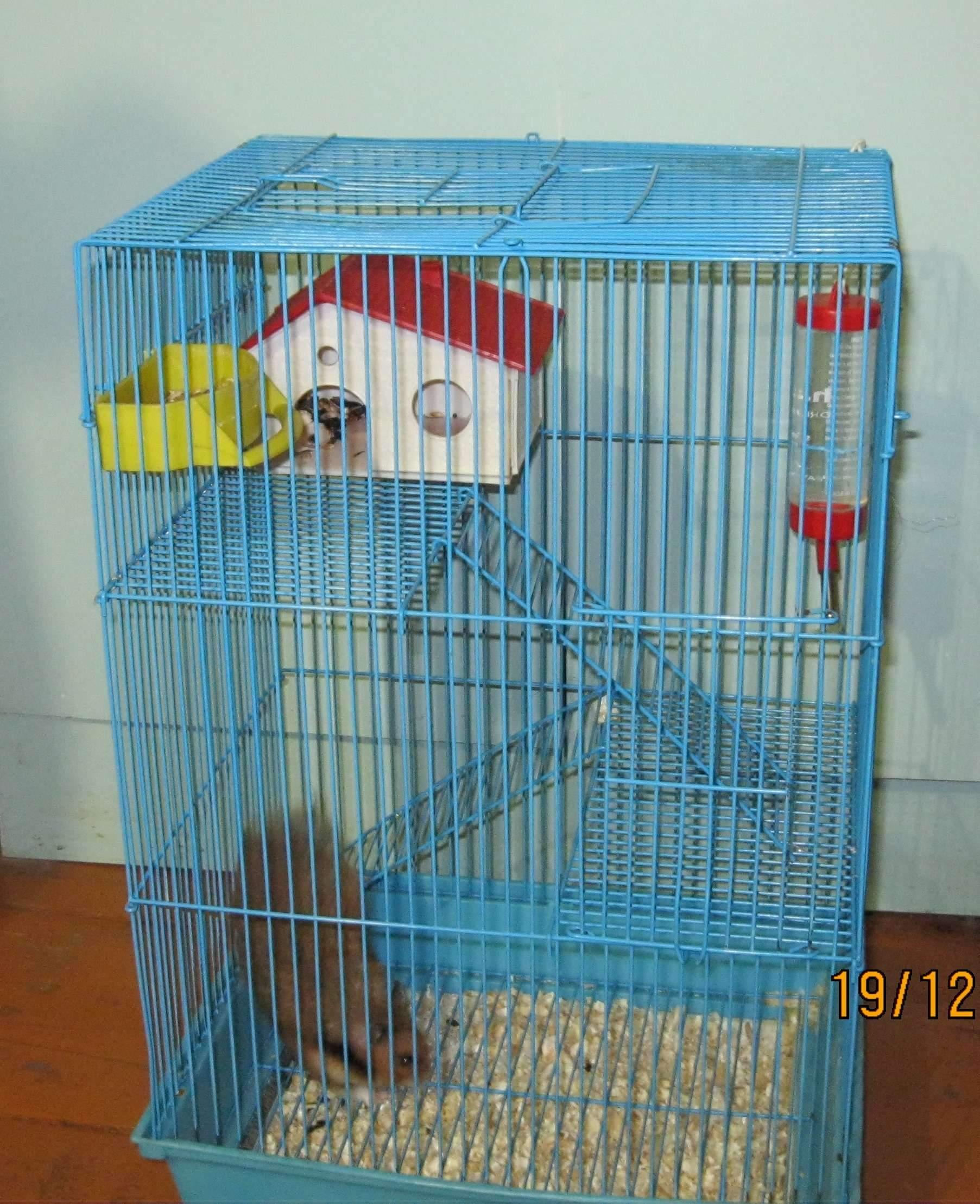 Можно ли сажать двух попугаев в одну клетку 27