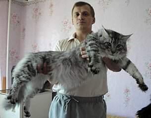 640 X 502  48.4 Kb Куплю котёнка Мэйн-кун.