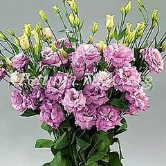 300 X 300 39.8 Kb 300 X 300 35.0 Kb цветы для вашего сада, кафе, придомовой территории