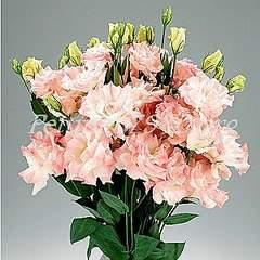 300 X 300 31.3 Kb 300 X 300 39.8 Kb 300 X 300 35.0 Kb цветы для вашего сада, кафе, придомовой территории