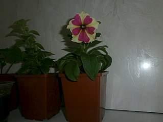 807 X 605 50.9 Kb цветы для вашего сада, кафе, придомовой территории