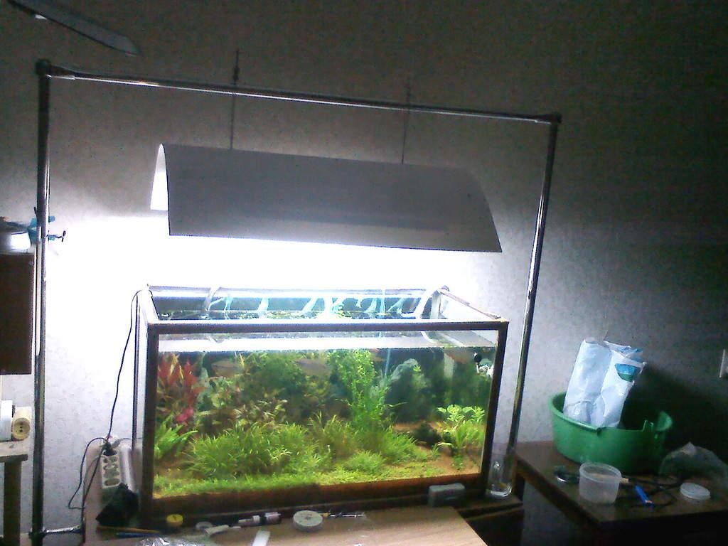 Аквариум на 30 литров: полноценный аквамир Blue Barbus