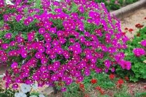 300 x 200 цветы для вашего сада, кафе, придомовой территории