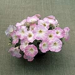 300 X 300 81.8 Kb 500 X 446 66.3 Kb цветы для вашего сада, кафе, придомовой территории