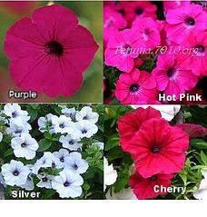 359 X 377 30.8 Kb 1024 X 731 375.5 Kb цветы для вашего сада, кафе, придомовой территории
