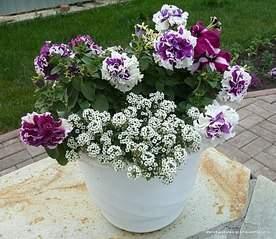 807 X 700 164.7 Kb цветы для вашего сада, кафе, придомовой территории