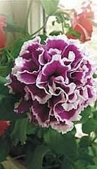 150 X 260 38.5 Kb 807 X 700 164.7 Kb цветы для вашего сада, кафе, придомовой территории