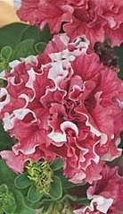 150 X 260 40.1 Kb 150 X 260 38.5 Kb 807 X 700 164.7 Kb цветы для вашего сада, кафе, придомовой территории