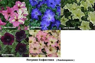 933 X 622 107.5 Kb цветы для вашего сада, кафе, придомовой территории