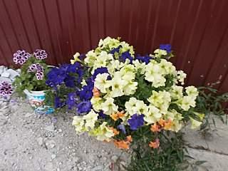 1280 X 960 211.2 Kb 933 X 622 107.5 Kb цветы для вашего сада, кафе, придомовой территории