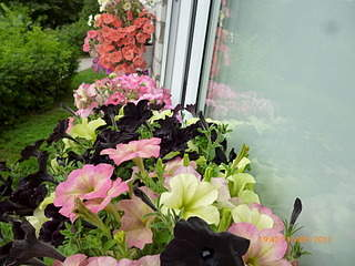 1024 X 768 251.5 Kb 831 X 326  60.7 Kb цветы для вашего сада, кафе, придомовой территории