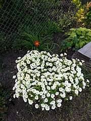 375 X 500 115.0 Kb цветы для вашего сада, кафе, придомовой территории