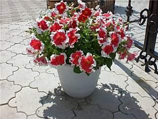 640 X 480  85.6 Kb цветы для вашего сада, кафе, придомовой территории