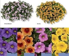 794 X 646 190.7 Kb 300 x 200 цветы для вашего сада, кафе, придомовой территории