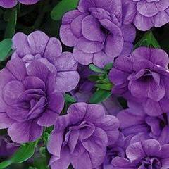 300 X 300  17.0 Kb цветы для вашего сада, кафе, придомовой территории