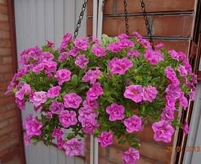 940 X 768 288.5 Kb 300 X 300  17.0 Kb цветы для вашего сада, кафе, придомовой территории