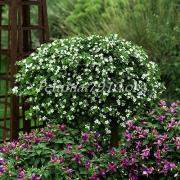 180 x 180 300 X 300  23.2 Kb цветы для вашего сада, кафе, придомовой территории