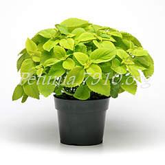 300 X 300 77.9 Kb цветы для вашего сада, кафе, придомовой территории