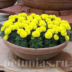 300 X 300 141.8 Kb 300 X 300 205.2 Kb цветы для вашего сада, кафе, придомовой территории