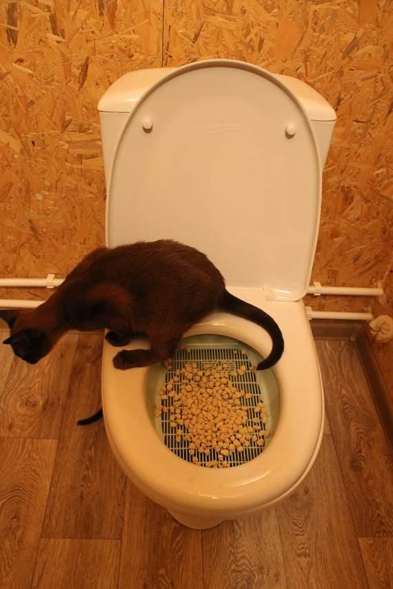 Крышка для унитаза для котов