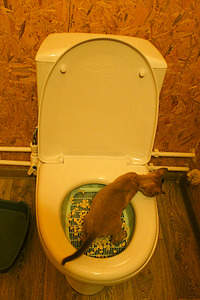 Туалет для кошки  для унитаза 3