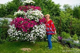 807 X 537 187.2 Kb 807 X 605 141.5 Kb цветы для вашего сада, кафе, придомовой территории
