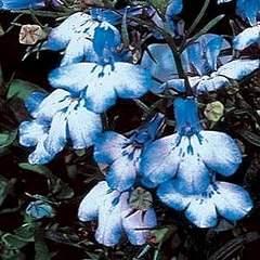 300 X 300 27.5 Kb цветы для вашего сада, кафе, придомовой территории