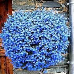 300 X 300 54.7 Kb 300 X 300 47.4 Kb 300 X 300 27.5 Kb цветы для вашего сада, кафе, придомовой территории
