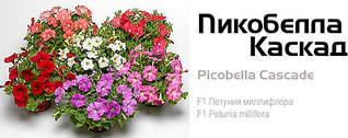505 X 200 33.6 Kb цветы для вашего сада, кафе, придомовой территории