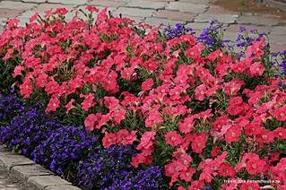 895 X 595 194.5 Kb 505 X 200 33.6 Kb цветы для вашего сада, кафе, придомовой территории