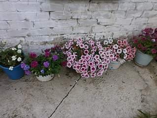 807 X 605 111.1 Kb цветы для вашего сада, кафе, придомовой территории. ВАКАНСИИ