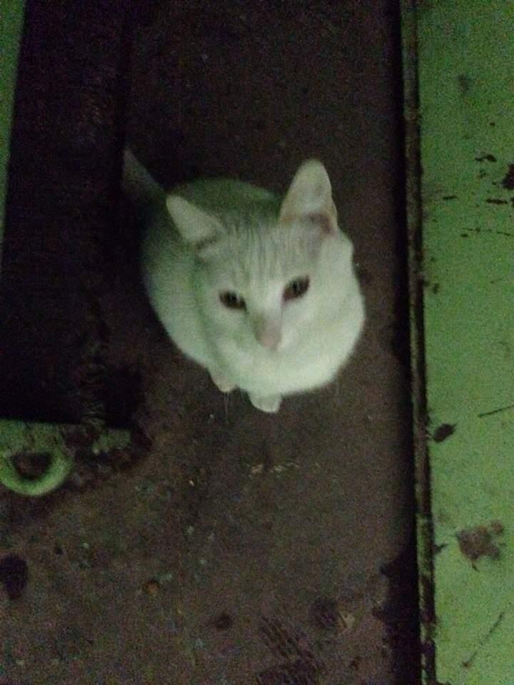 Что приноси в дом белый кот