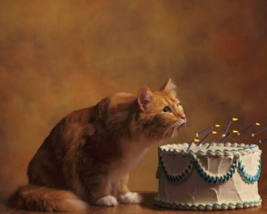 Поздравление с днём рождения хозяйке