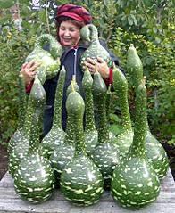 800 X 975 151.1 Kb Цветы для вашего сада, кафе, придомовой территории. КУПИМ многолетники