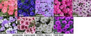 1024 X 446 101.1 Kb Продам рассаду сортовых петуний и других однолеток из профессиональных семян.