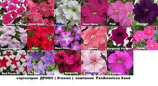 1024 X 556 117.6 Kb 1024 X 446 101.1 Kb Продам рассаду сортовых петуний и других однолеток из профессиональных семян.