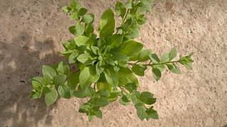 1920 X 1079 493.3 Kb 1920 X 1079 410.8 Kb 1920 X 1079 255.3 Kb Продам рассаду сортовых петуний и других однолеток из профессиональных семян.