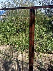 1536 X 2048 828.9 Kb 1536 X 2048 684.2 Kb забор профнастил, теплицы(фото работ)