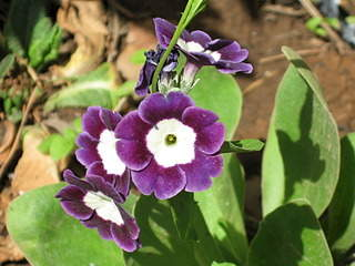 1920 X 1440 587.0 Kb Цветы для вашего сада, кафе, придомовой территории. КУПИМ многолетники