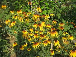 1920 X 1440 483.9 Kb 1920 X 1440 587.0 Kb Цветы для вашего сада, кафе, придомовой территории. КУПИМ многолетники