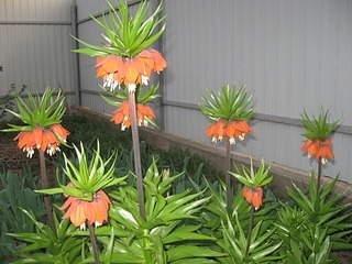 1920 X 1440 614.0 Kb 1536 X 2048 317.4 Kb Цветы для вашего сада, кафе, придомовой территории. КУПИМ многолетники